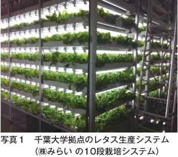 人工光型植物工場における結球レ...