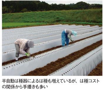 宮崎県南那珂地区のごぼう栽培 ...