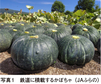 https://vegetable.alic.go.jp/yasaijoho/senmon/1511/01-06.jpg